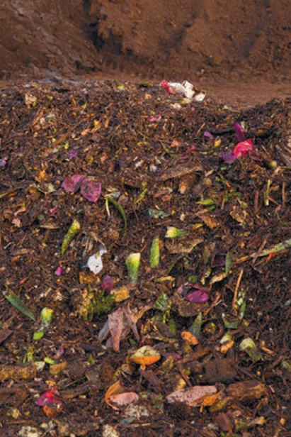 flattened diced row of food compost